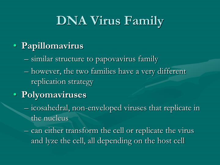 DNA Virus Family