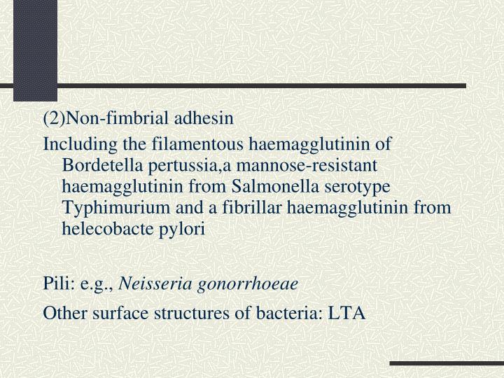 (2)Non-fimbrial adhesin