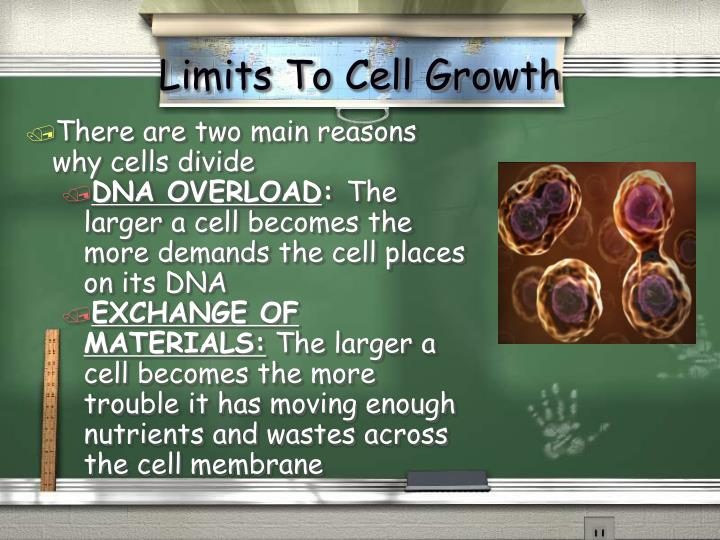 Limits to cell growth