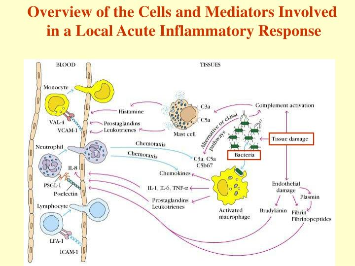 Overview of the Cells and Mediators Involved