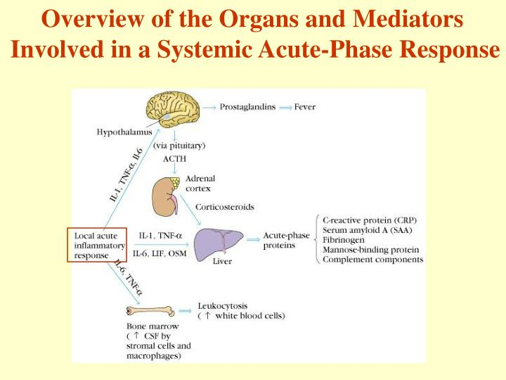 Overview of the Organs and Mediators
