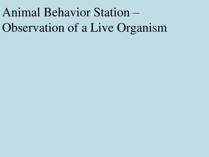 Animal Behavior Station – Observation of a Live Organism