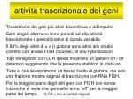 attivit trascrizionale dei geni