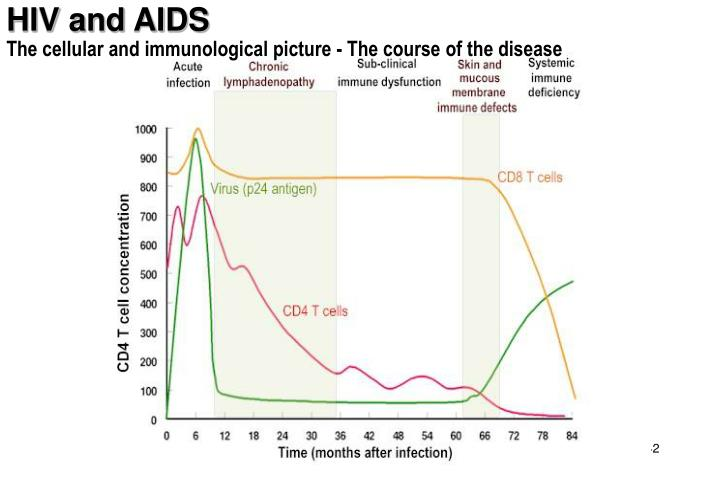 The cellular and immunological picture - The course of the disease