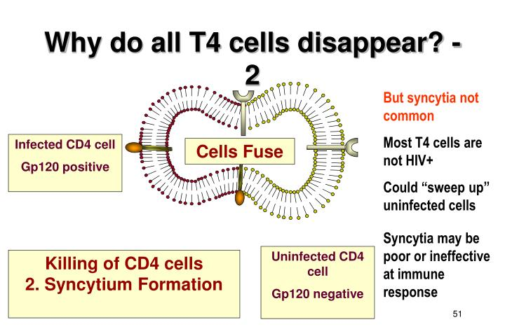 Why do all T4 cells disappear? - 2