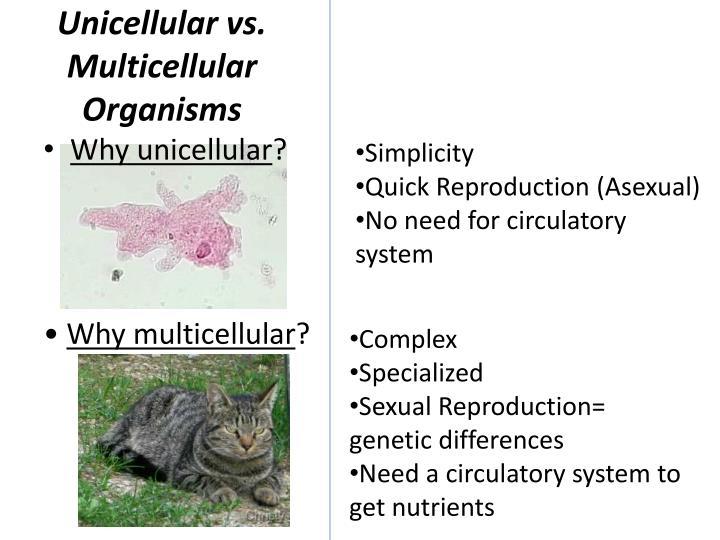 Unicellular vs.