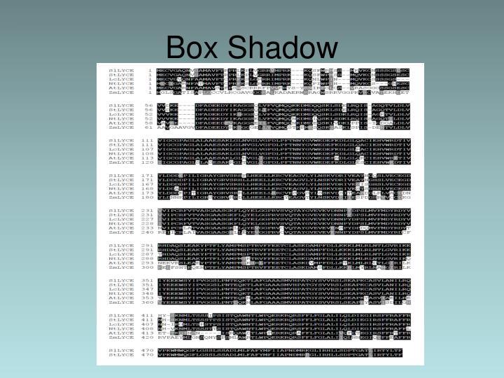 Box Shadow