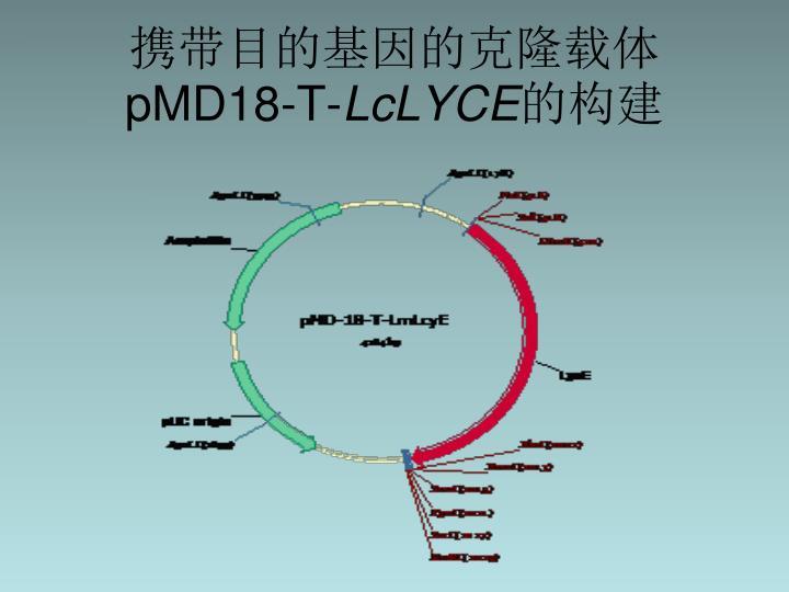携带目的基因的克隆载体