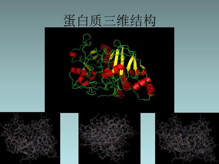 蛋白质三维结构
