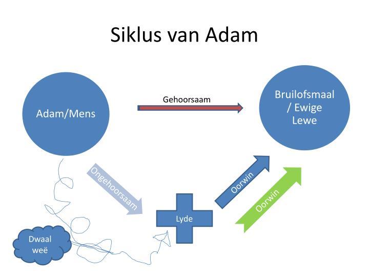 Siklus van Adam