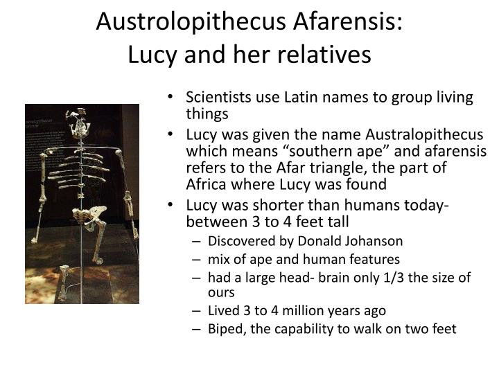 Austrolopithecus afarensis lucy and her relatives