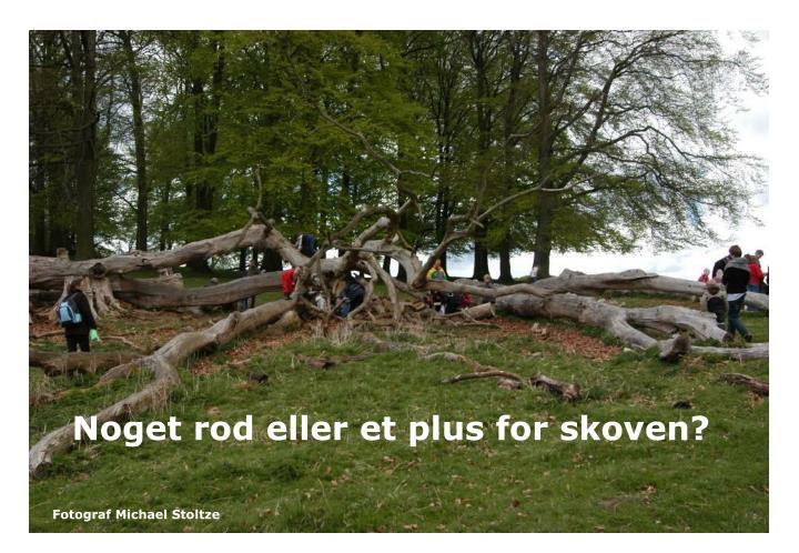 Noget rod eller et plus for skoven?