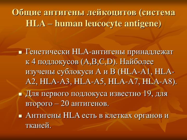 Общие антигены лейкоцитов (система