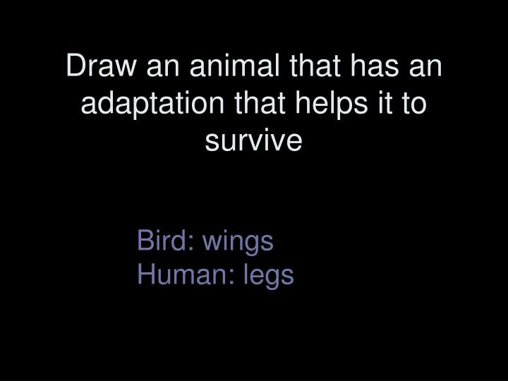 Draw an animal that has an adaptation that helps it to survive