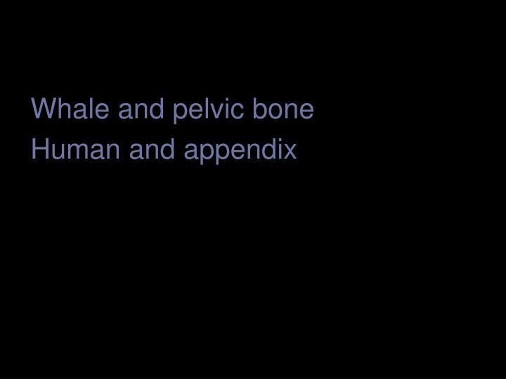 Whale and pelvic bone