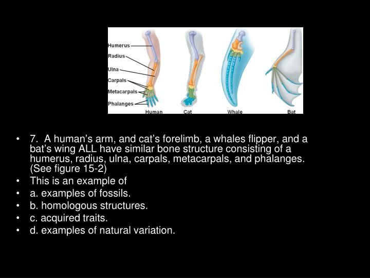 7.  A human's arm, and cat's forelimb, a whales flipper, and a bat's wing ALL have similar bone structure consisting of a humerus, radius, ulna, carpals, metacarpals, and phalanges. (See figure 15-2)