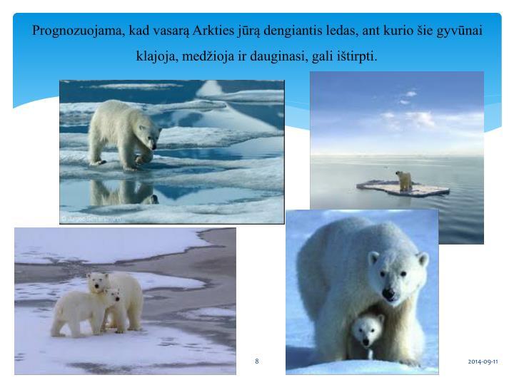 Prognozuojama, kad vasarą Arkties jūrą dengiantis ledas, ant kurio šie gyvūnai klajoja, medžioja ir dauginasi, gali ištirpti.