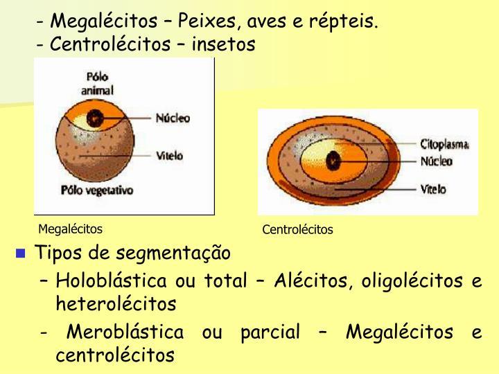 Megalécitos
