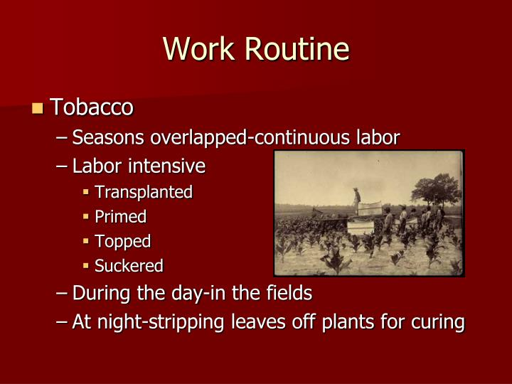 Work Routine