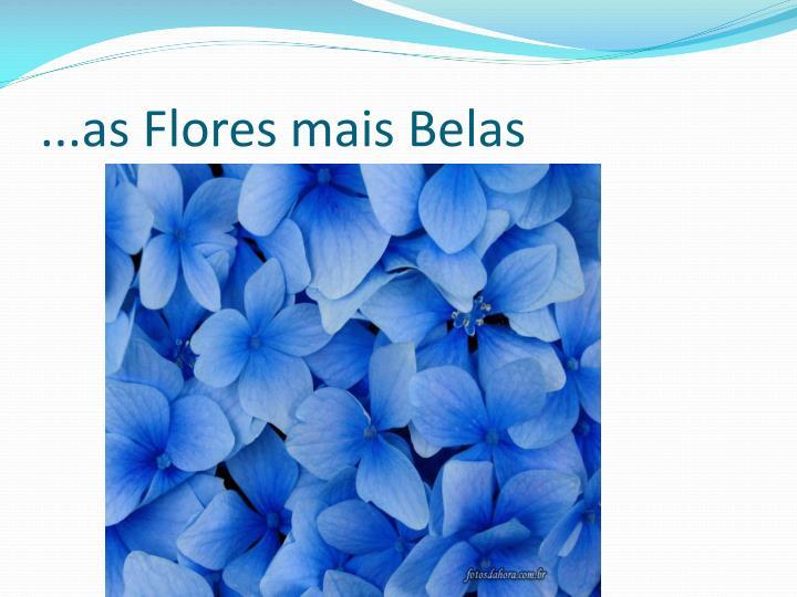 ...as Flores mais Belas