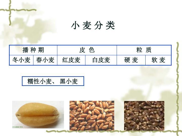 小 麦 分 类