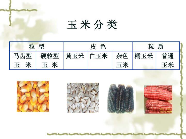 玉 米 分 类