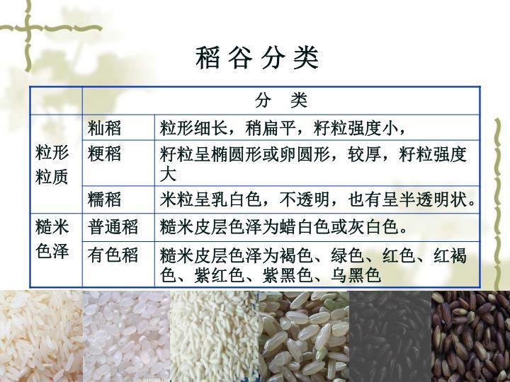 稻 谷 分 类