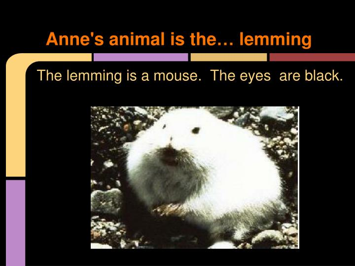 Anne s animal is the lemming
