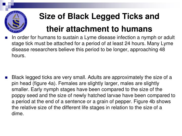 Size of Black Legged Ticks and their attachment to humans