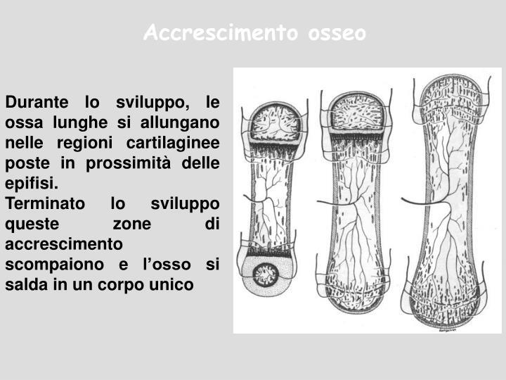 Accrescimento osseo