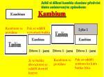 kambium3
