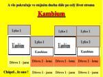 kambium4