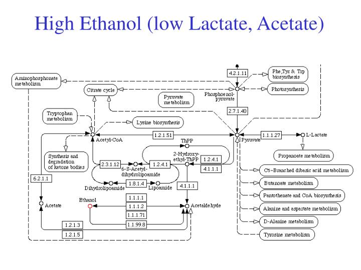 High Ethanol (low Lactate, Acetate)
