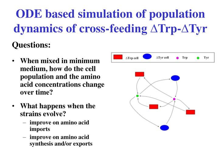ODE based simulation of population dynamics of cross-feeding ∆Trp-∆Tyr