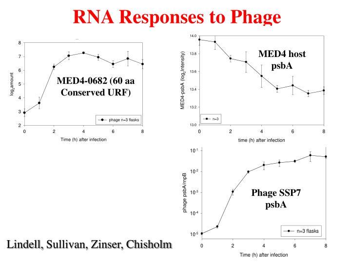RNA Responses to Phage
