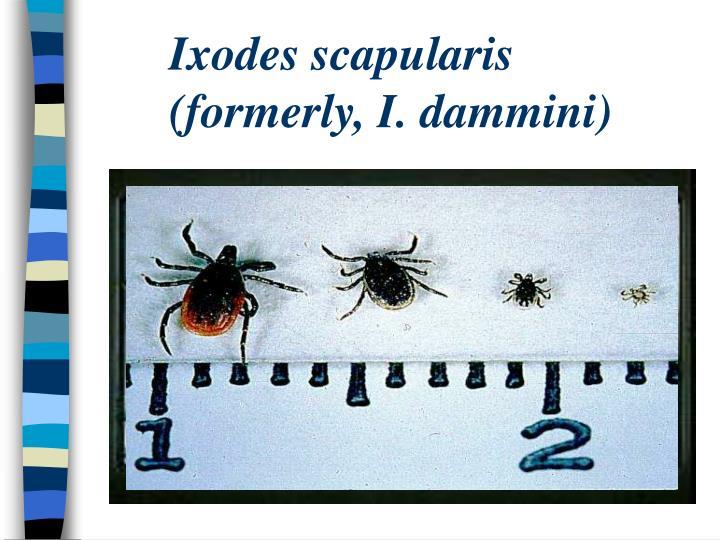 Ixodes scapularis