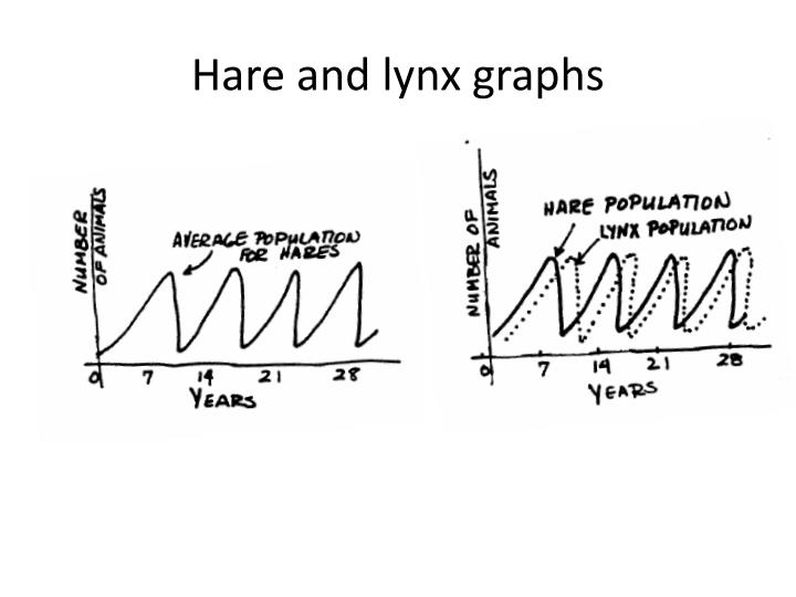 Hare and lynx graphs
