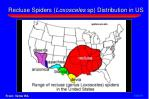 recluse spiders loxosceles sp distribution in us