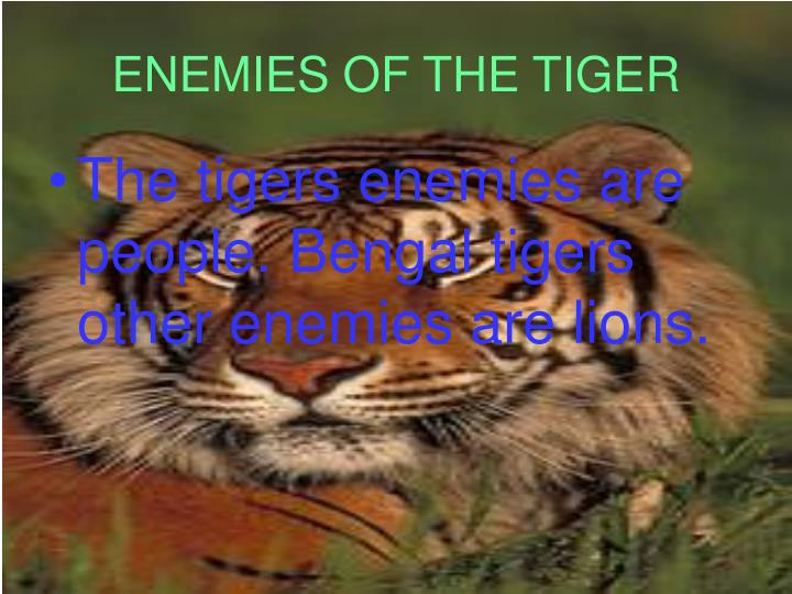 ENEMIES OF THE TIGER