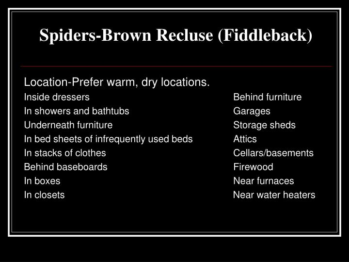 Spiders-Brown Recluse (Fiddleback)