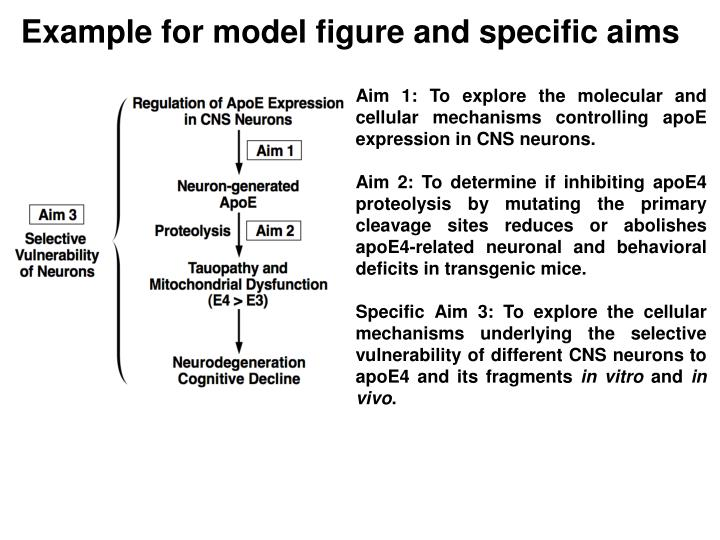 Example for model figure and specific aims