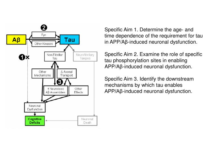 Specific Aim 1. Determine the age- and time dependence of the requirement for tau in APP/A