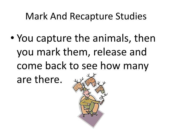 Mark And Recapture Studies