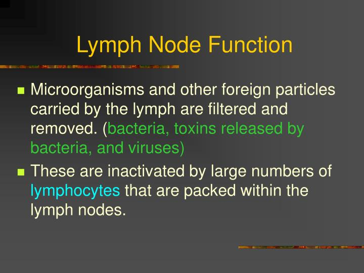 Lymph Node Function