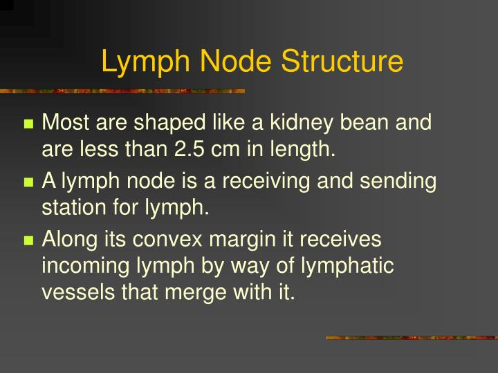 Lymph Node Structure
