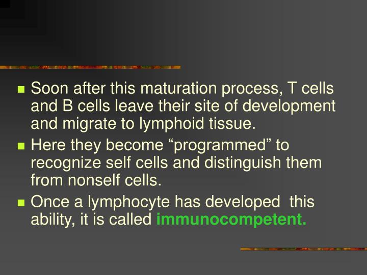 Soon after this maturation process, T cells and B cells leave their site of development and migrate to lymphoid tissue.