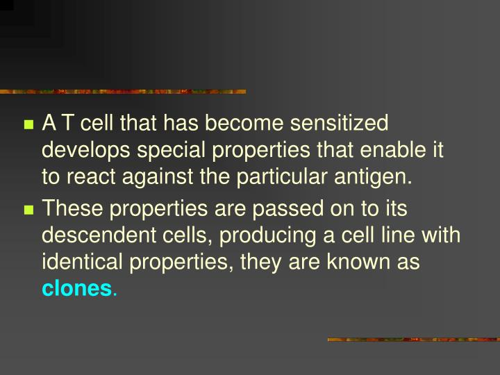A T cell that has become sensitized develops special properties that enable it to react against the particular antigen.