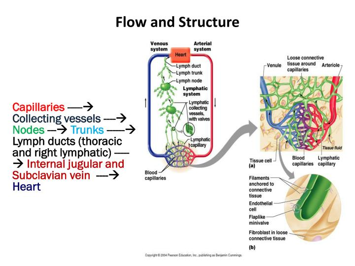 Flow and Structure
