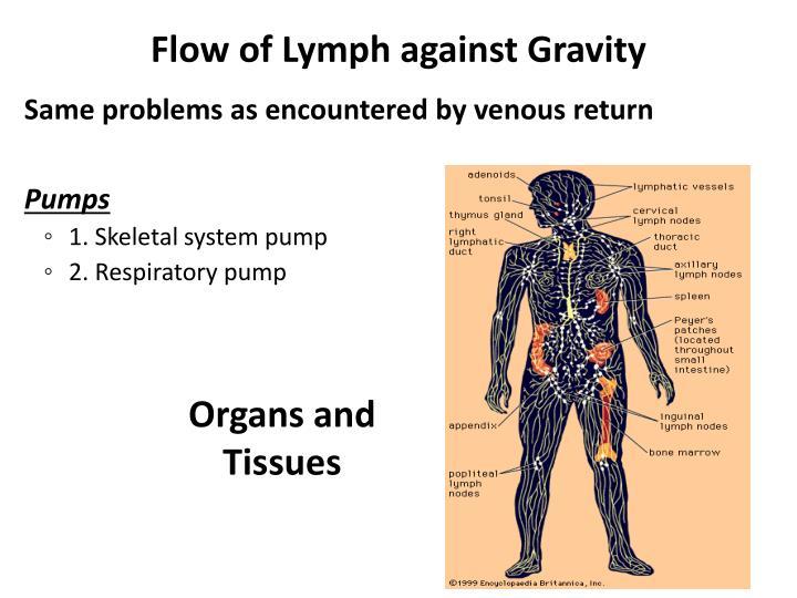 Flow of Lymph against Gravity