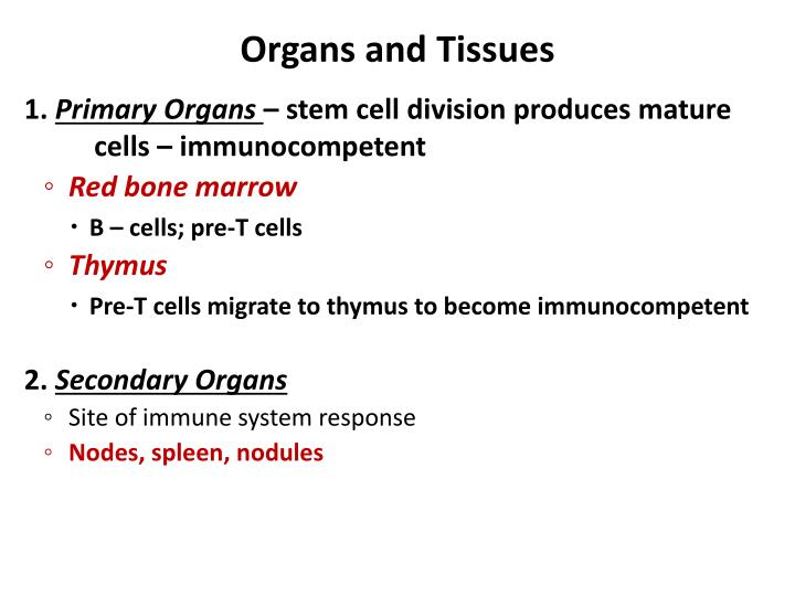 Organs and Tissues